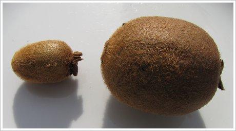 Kiwi klein und groß im Vergleich